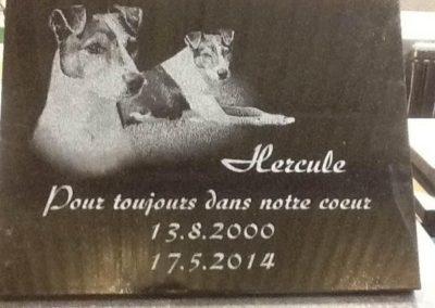 Plaques mortuaires Liège